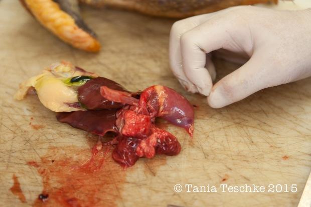 Tania Teschke Photography-Poulailler D'Augustin Pintade Farcie-2030